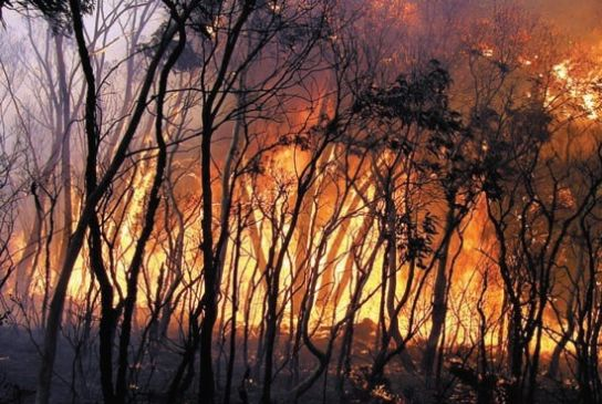The Australian bush on fire