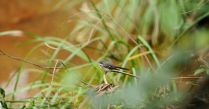 Small bird in grass
