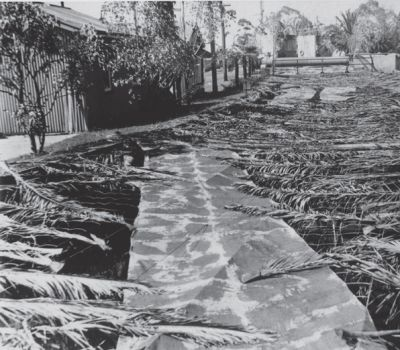 black and white photo of canal covered by leaves and branches