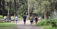 People walking under trees