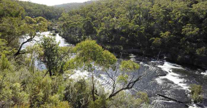 River and bushland