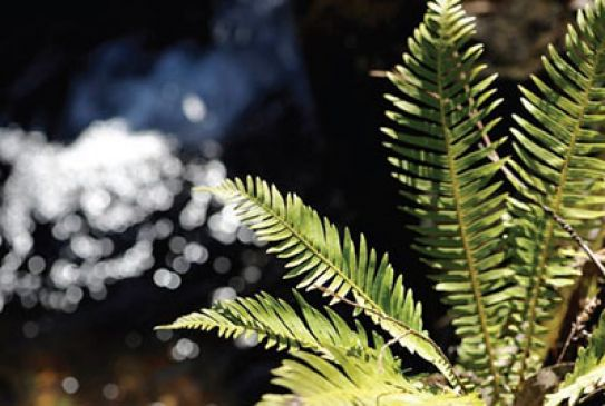 Fern and water