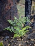 fern and burnt tree trunk